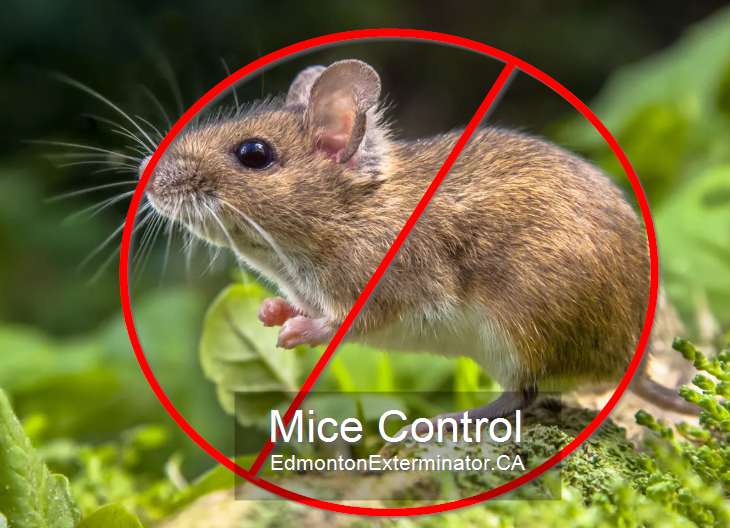 mice control company in edmonton