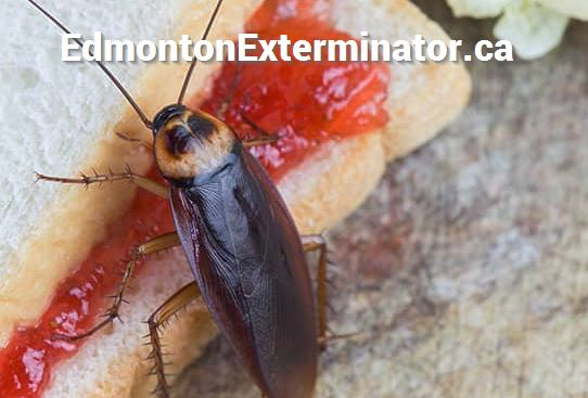 winter pest control near fort edmonton park in edmonton